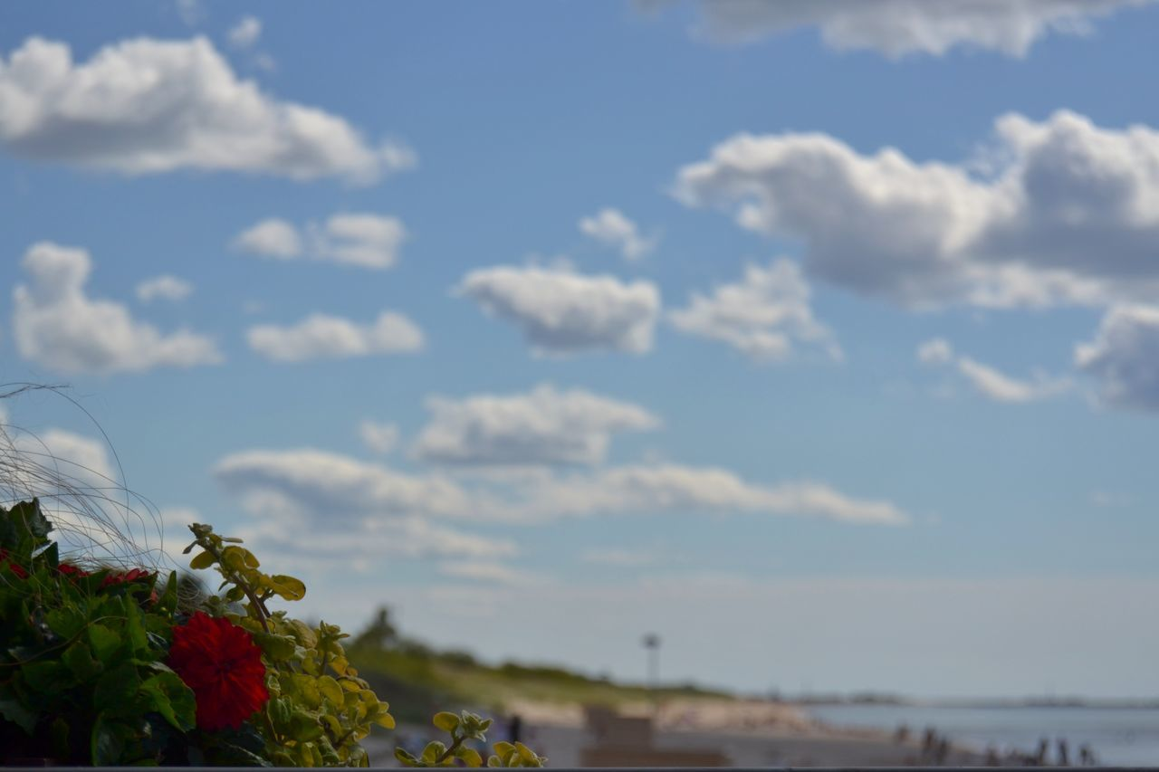 flower, sky, cloud - sky, nature, beauty in nature, growth, no people, outdoors, day, fragility, plant, freshness, close-up, flower head