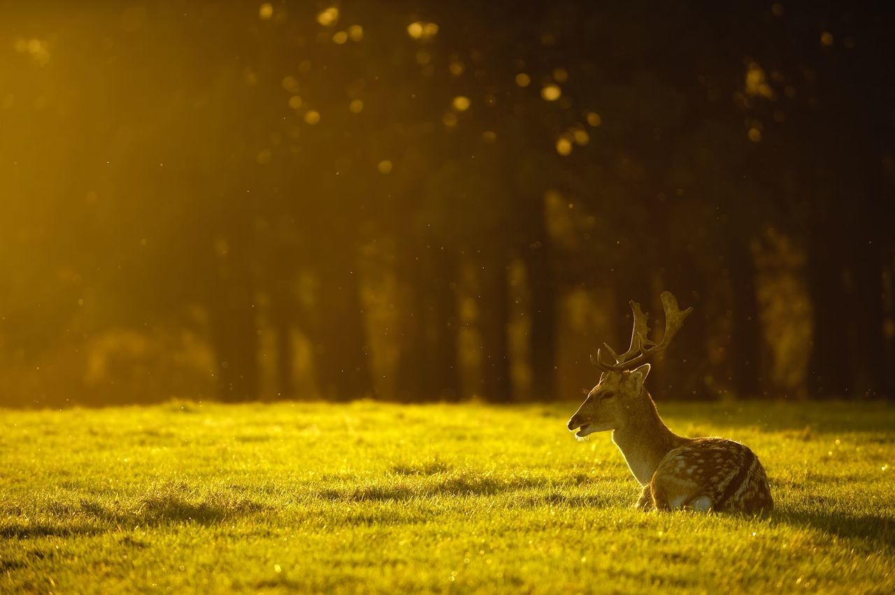 Beautiful stock photos of meadow, Animal Themes, Day, Deer, Focus On Foreground
