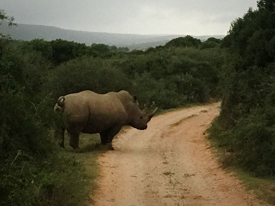 IPhoneography White Rhino South Africa Endangered Species Save The Rhinos Conservation Through Education Stop Poaching Protect The Future @StopRhinoPoach Lost In The Landscape