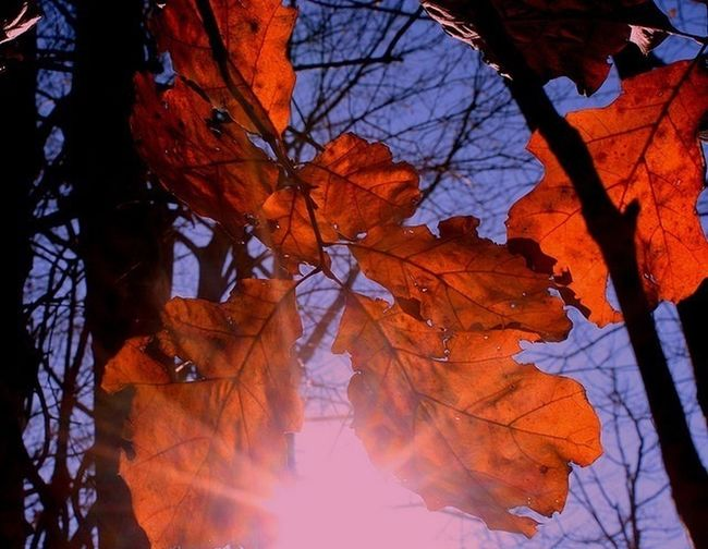 """""""... I had the elated, otherworldly feeling I sometimes get entering the sphere of another's life..."""" NKrauss IvyandOak Naturelovers Autumn Leaves Whenyouloveanoctobergirl"""