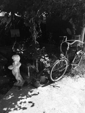 Bicycle No People Outdoors Day Statue Capo D'Orlando Messina Sicilia Nature Black & White