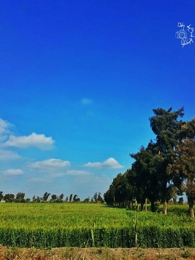Growth Tree Nature Agriculture No People Beauty In Nature Cloud - Sky Sky Day Plant Landscape Cereal Plant Infinix Sunset Egypt Infinixphotography Infinixcam Alexandria Technology Camera Beauty In Nature Infinixhot3 Growth Plant Tree