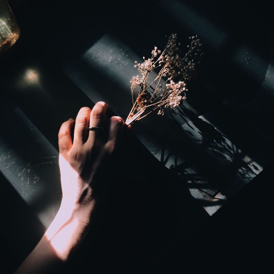 Beautiful stock photos of light, Cropped, Day, Flower, Fragility