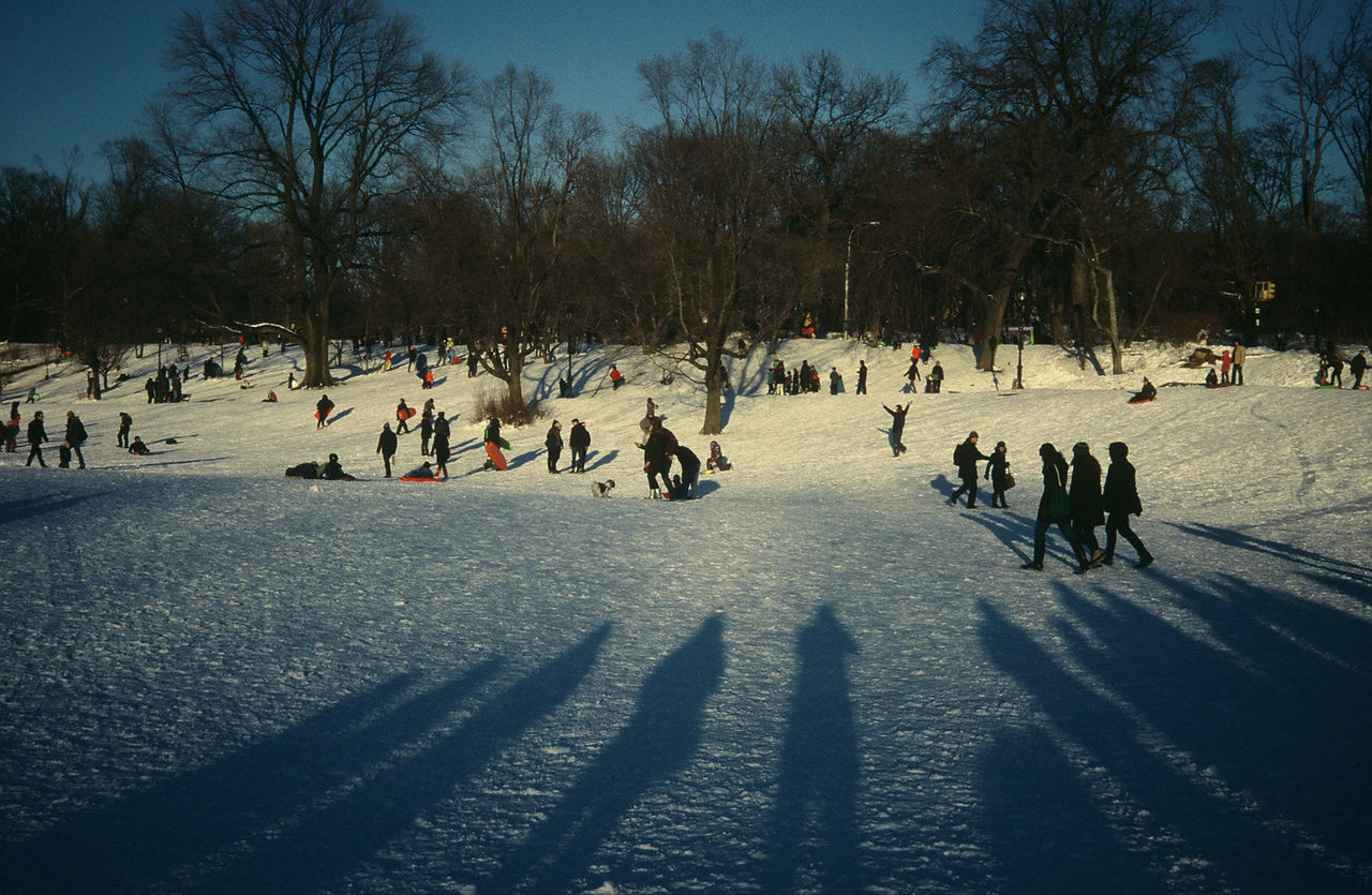 Bare Tree Cold Temperature Large Group Of People Nature New York City New Ypo Outdoors People Prospect Park S Shadow Sky Slide Film Snow Tree Vintage Style Winter