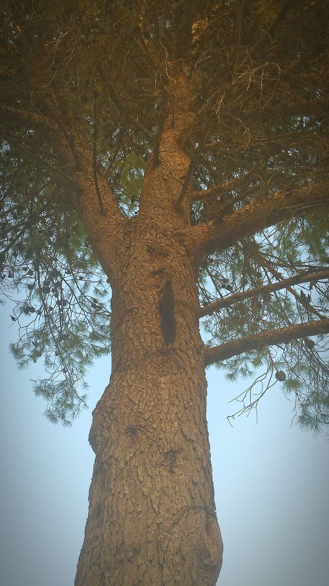 La ardilla trepadora Úbeda Low Angle View Tree Tree Trunk Growth Branch Close-up Clear Sky Nature Day Tranquility Sky Scenics Beauty In Nature Outdoors Tranquil Scene Tall No People Úbeda Jaen Provincia Ardilla Ardilla Ardillas