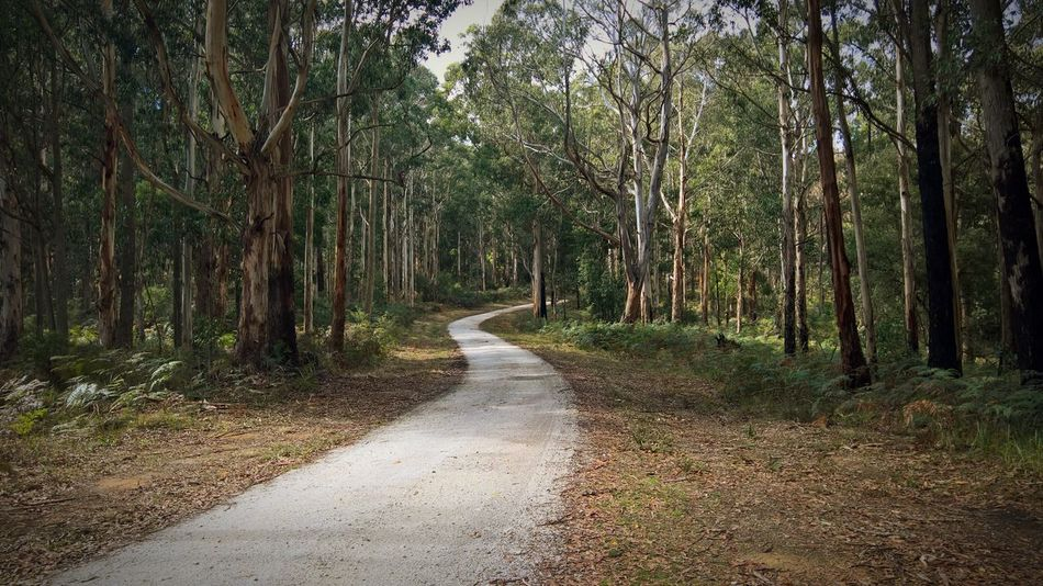 Away From It All Tree The Way Forward Nature Tranquility Tranquil Scene Forest Growth Beauty In Nature Non-urban Scene Day Scenics Outdoors No People Gravel Road
