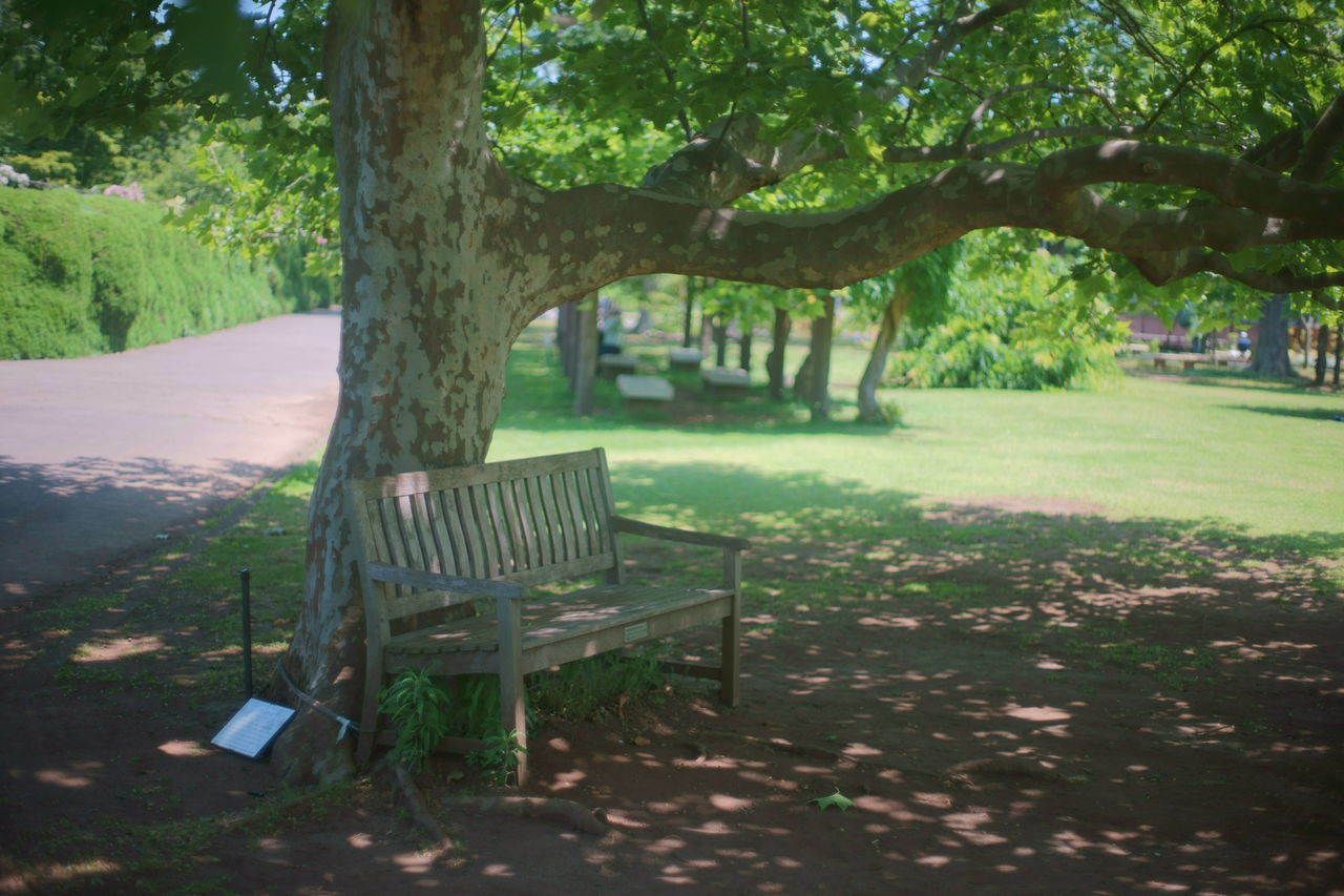 tree, absence, empty, chair, nature, outdoors, tranquility, table, tranquil scene, no people, day, tree trunk, landscape, relaxation, beauty in nature, growth, grass, seat