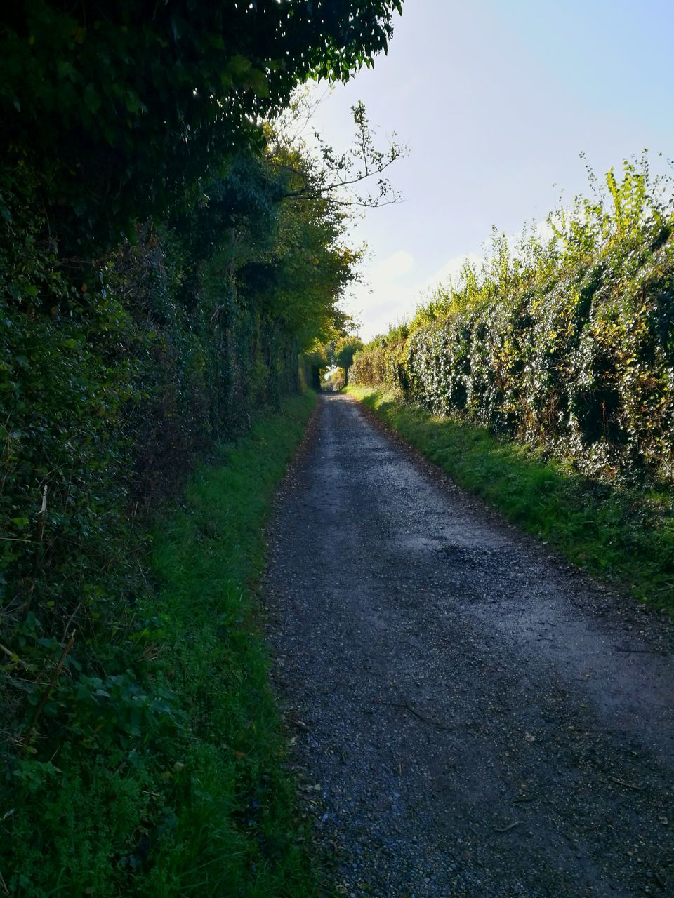 the way forward, diminishing perspective, tree, road, nature, day, no people, tranquility, growth, tranquil scene, grass, outdoors, landscape, scenics, beauty in nature, sky