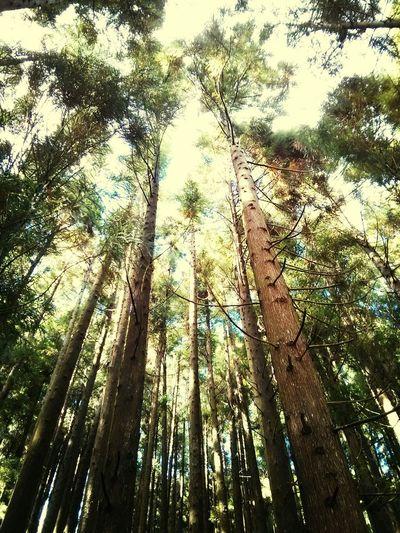 Woods Azzzores
