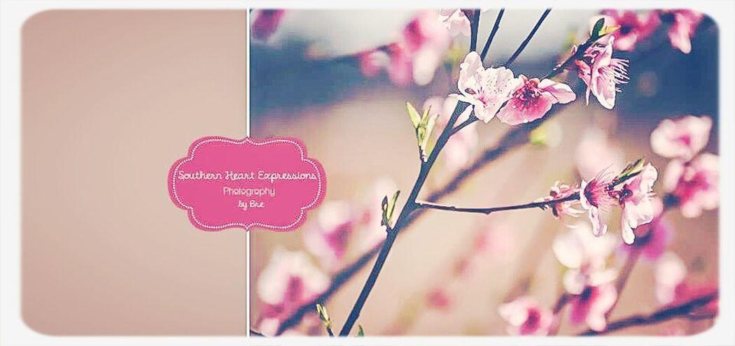 pretty in pink Pink Flower