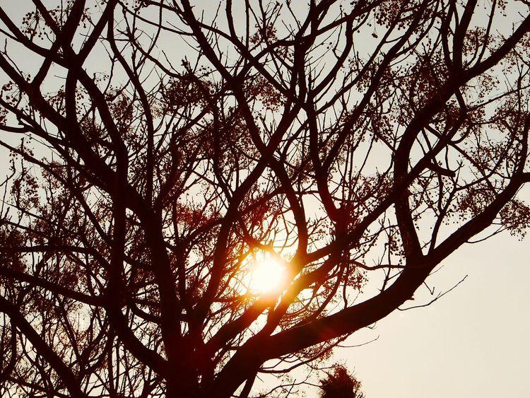 Makro_collection Eyemphotography Eyeembestshots Eyeembestedits Eyeem Eyemphotography Antalya Samsung Smart Camera Samsungphotography Suliet Sunset #sun #clouds #skylovers #sky #nature #beautifulinnature #naturalbeauty #photography #landscape