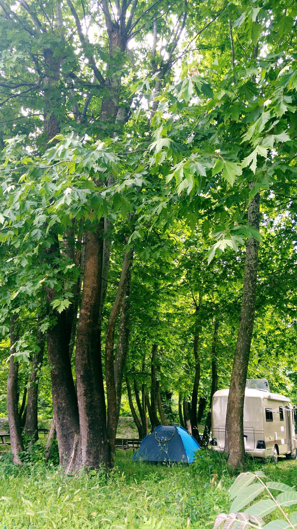 Yeşil Doğa Yeşil Green Color Orman Kamp Karavan Güneş,mutluluk,huzur :) Tree Nature Nature Photography Nature_collection Naturephotography LG Phone Camera Ağaçlar ♥♡♥ Nature_perfection Nature Beauty çadır