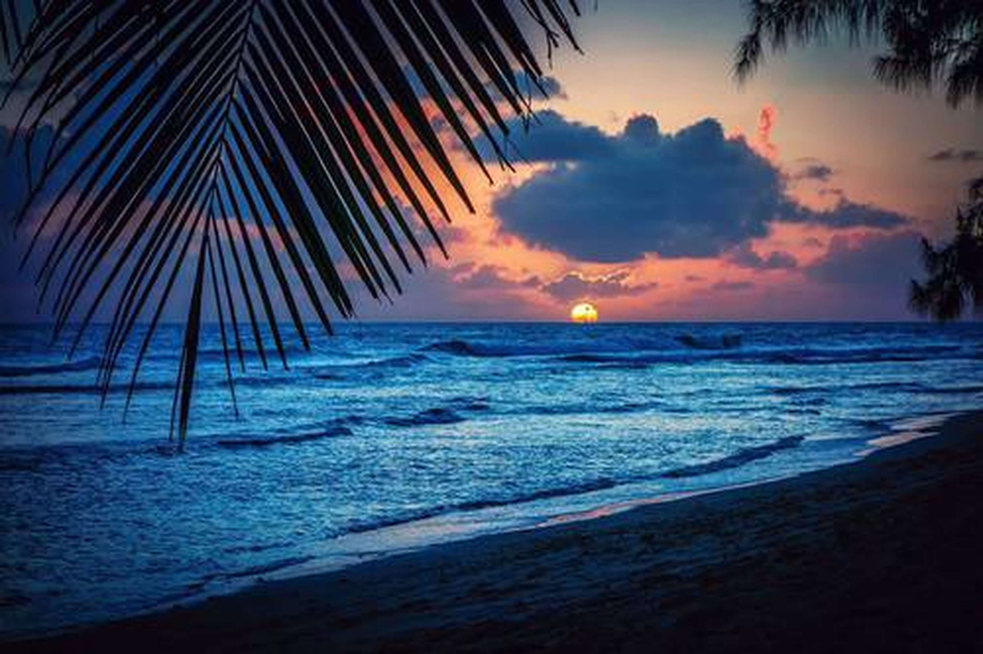 sea, horizon over water, beach, water, sunset, scenics, shore, tranquil scene, beauty in nature, sky, tranquility, palm tree, nature, wave, idyllic, sand, orange color, cloud - sky, coastline, surf