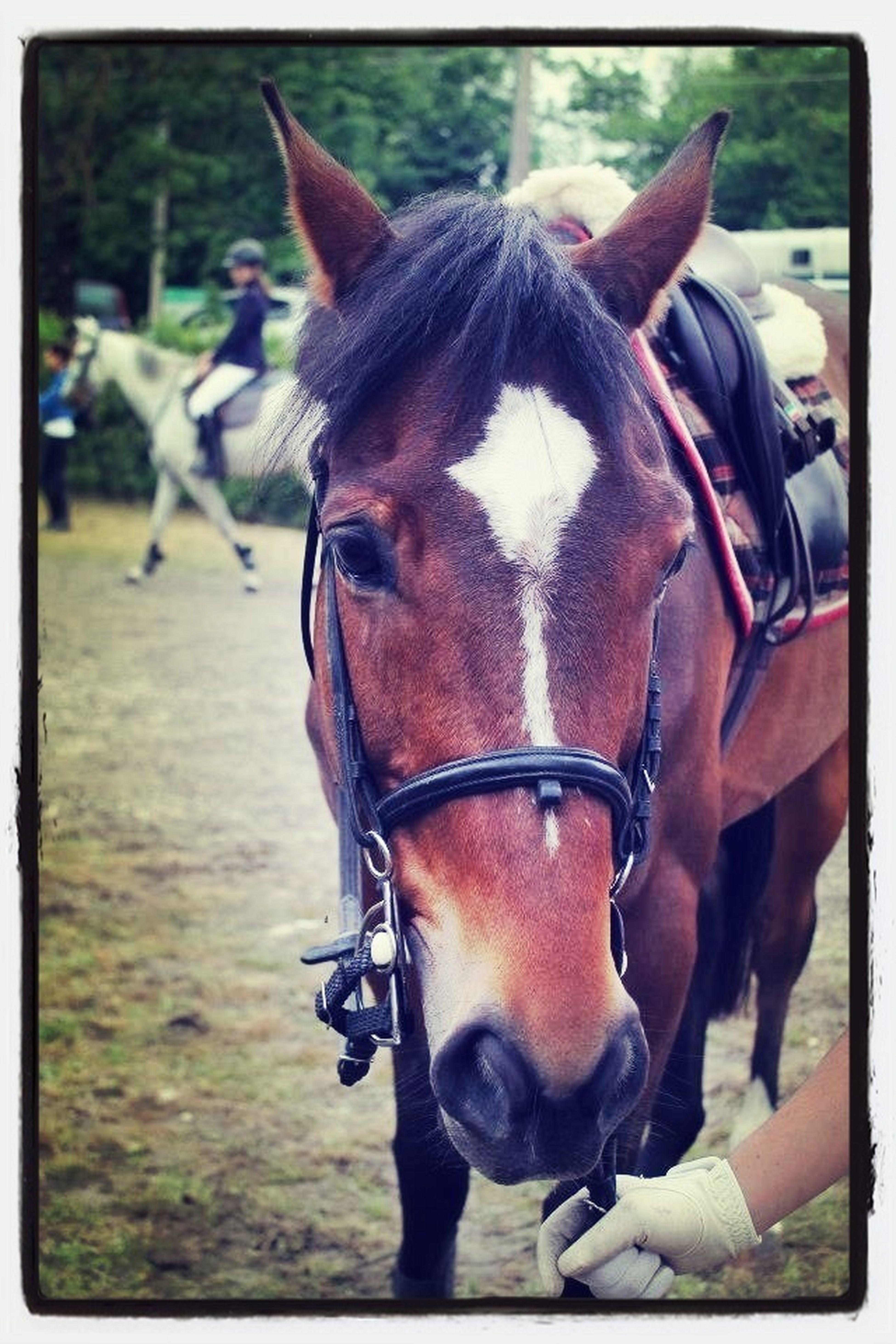 Top Pony Dolce ❤