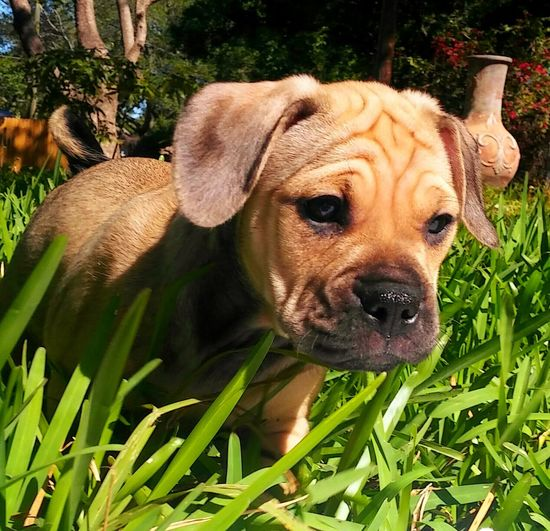 Puppy Love ❤ So Beautiful ♥♥ In The Grass Up Close & Personal What A View!