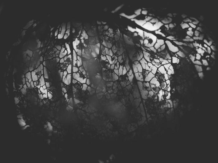 strukturen Close-up Dark Decay Deterioration Fugacity Full Frame Natural Pattern Nature Plant Structure Vignette