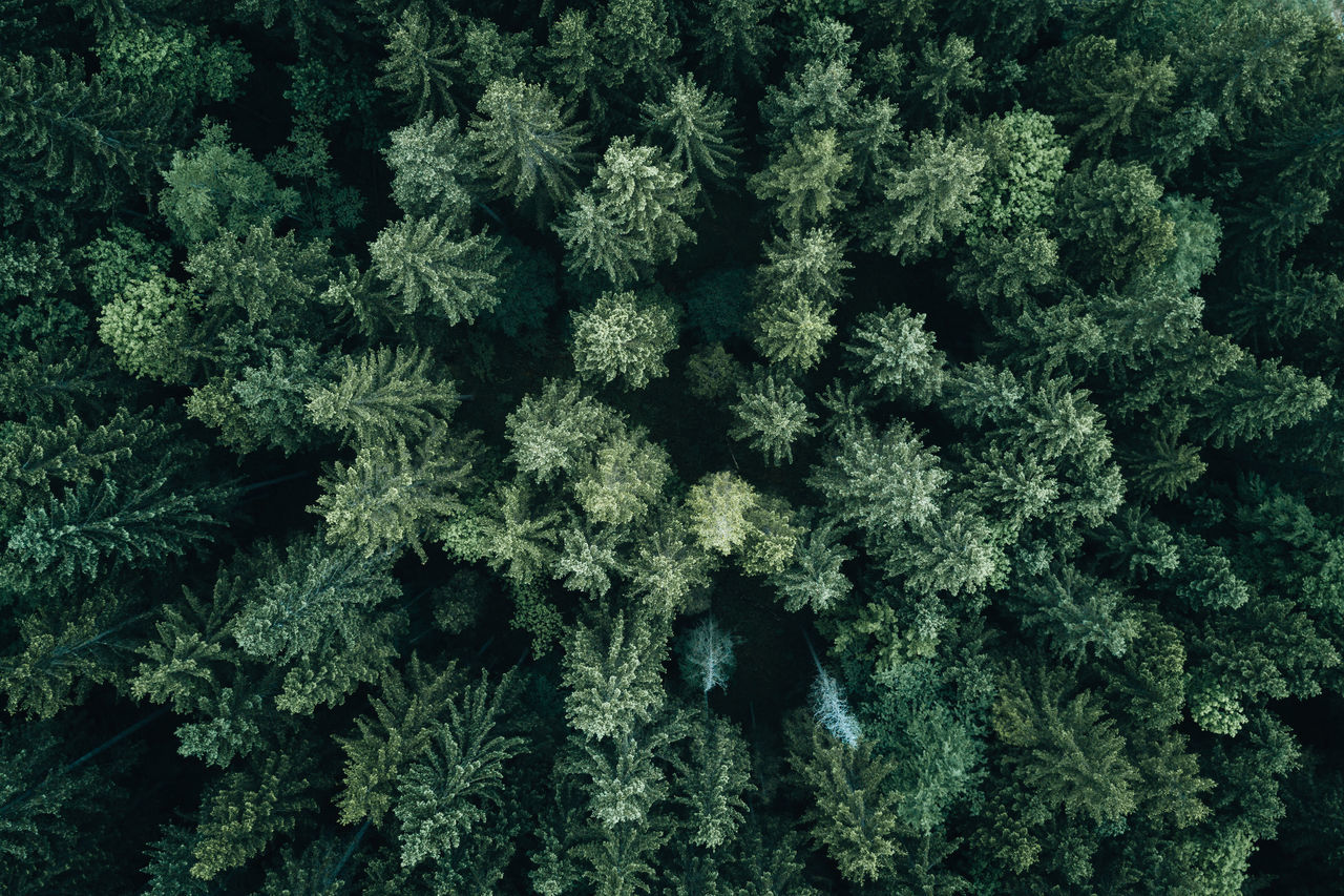 Forest from above Backgrounds Christmas Close-up Day Forest Freshness Full Frame Green Color Growth Indoors  Leaf Nature No People Pattern Pine Plant Snowflake Spruce Tree Tree Winter