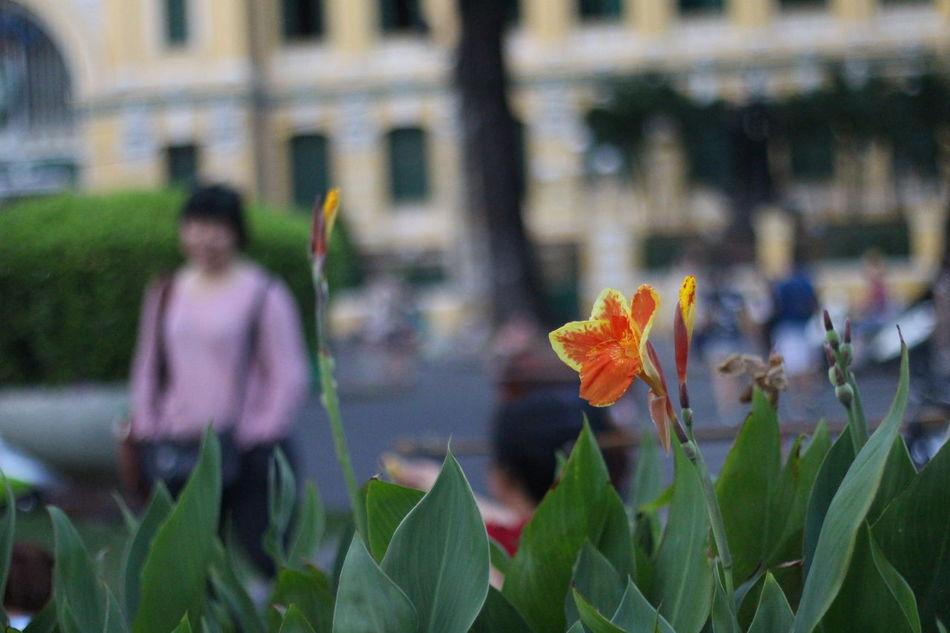 Flower Nature Bưu Điện Thành Phố Hồ Chí Minh Nhathoducba 700D 50mm F1.8