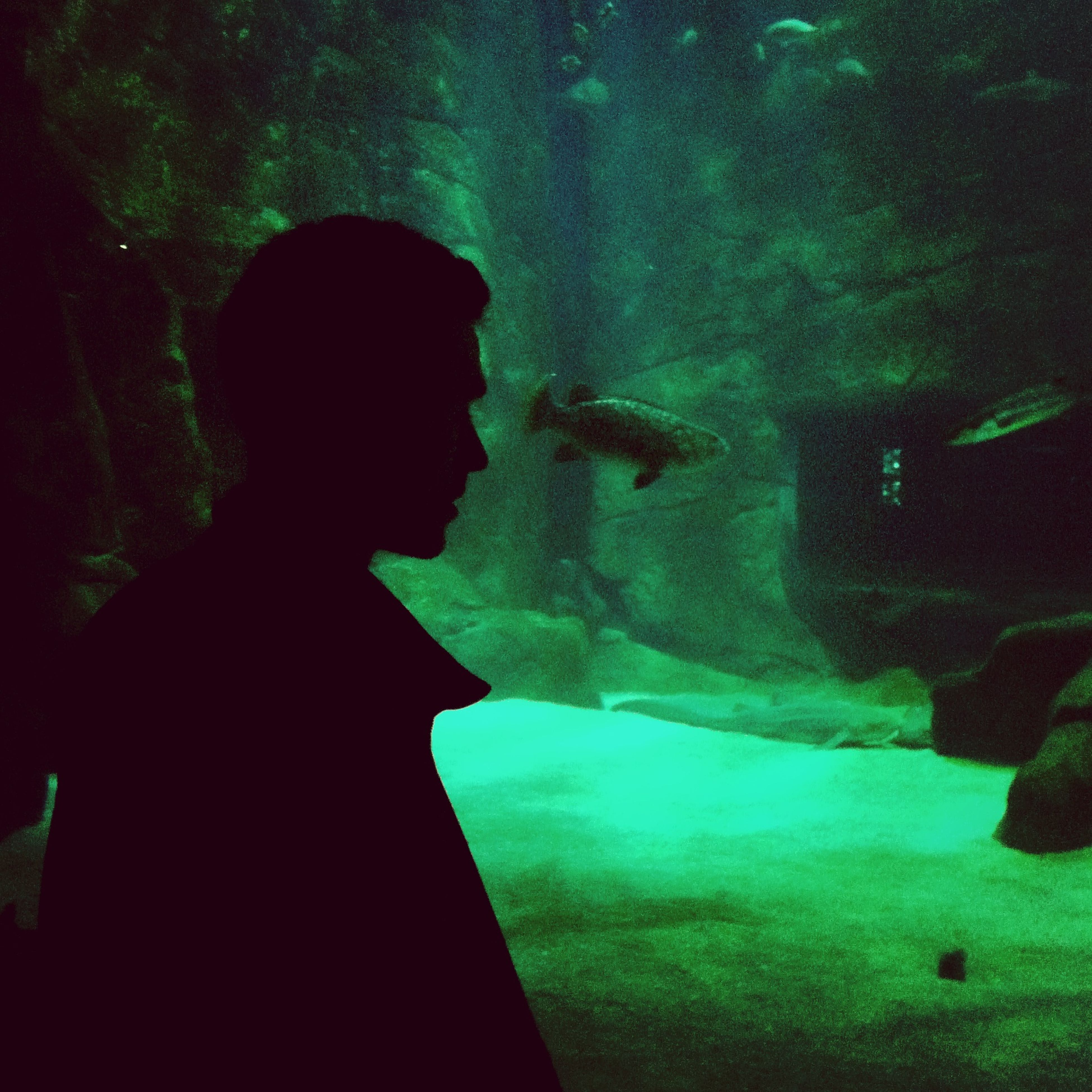 underwater, water, swimming, silhouette, blue, animals in the wild, undersea, night, sea, wildlife, one person, aquarium, indoors, animal themes, nature, sea life, fish, beauty in nature, transparent, rock - object
