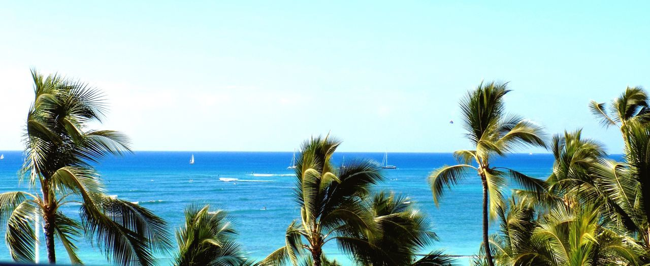 sea, horizon over water, nature, scenics, palm tree, sky, beauty in nature, tranquil scene, tranquility, blue, water, clear sky, beach, growth, day, outdoors, no people, tree