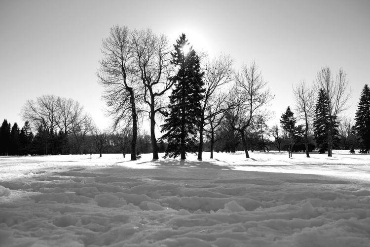 Winter wonderland Montréal Montreal, Canada Tree Nature Snow No People Sky Outdoors Cold Temperature Winter Landscape Day Beauty In Nature Canada Blackandwhite Monochrome Fujifilm Fujifilm_xseries FUJIFILM X-T10