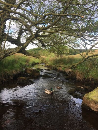 Longshaw Estate Tree Nature Water Tranquil Scene River Beauty In Nature Scenics Tranquility Outdoors Day Landscape Forest Travel Destinations No People Vacations Swimming Sky Animal Themes Mammal Peak District