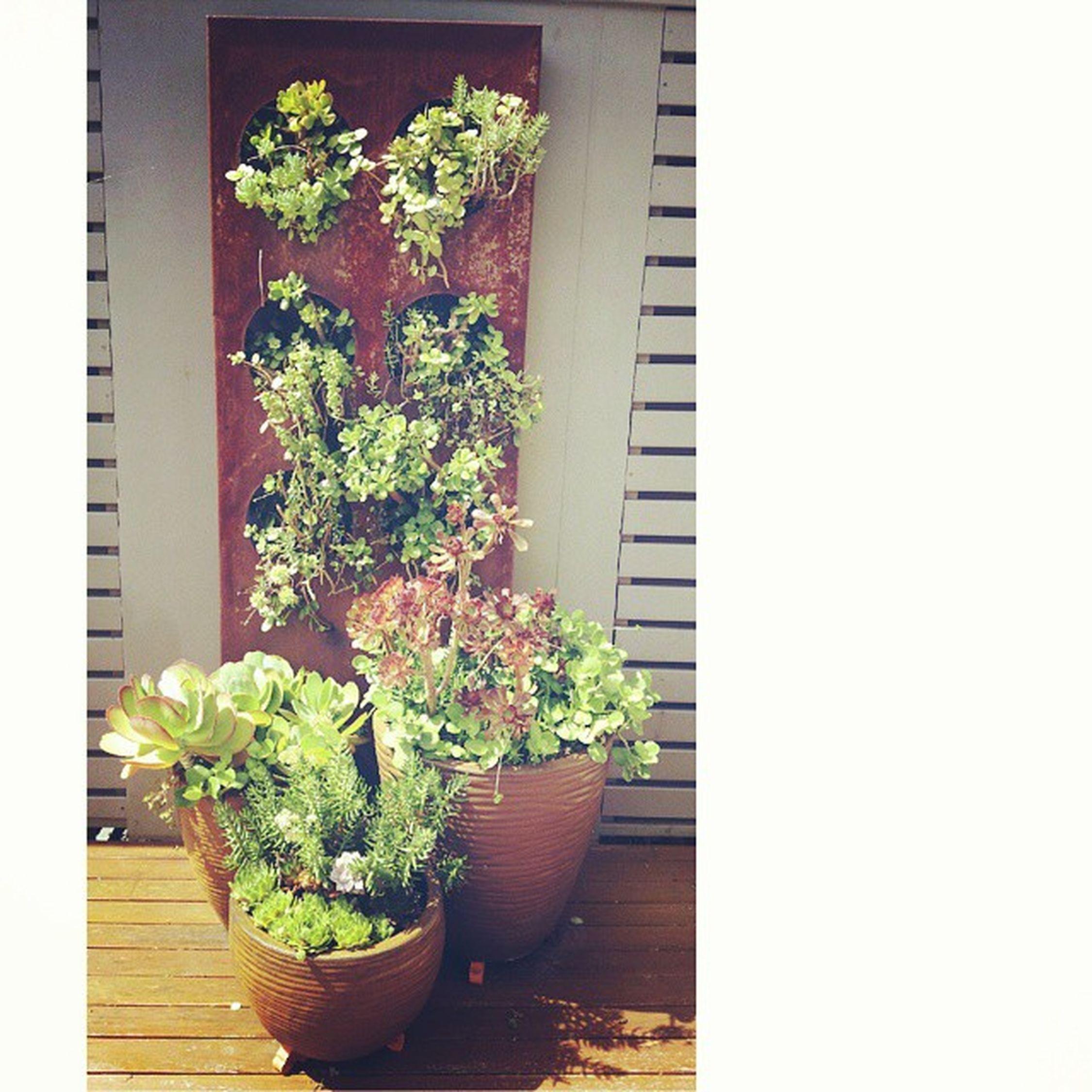 Im so in love with dads succulent garden. Omgg Succulents Garden Cuteas