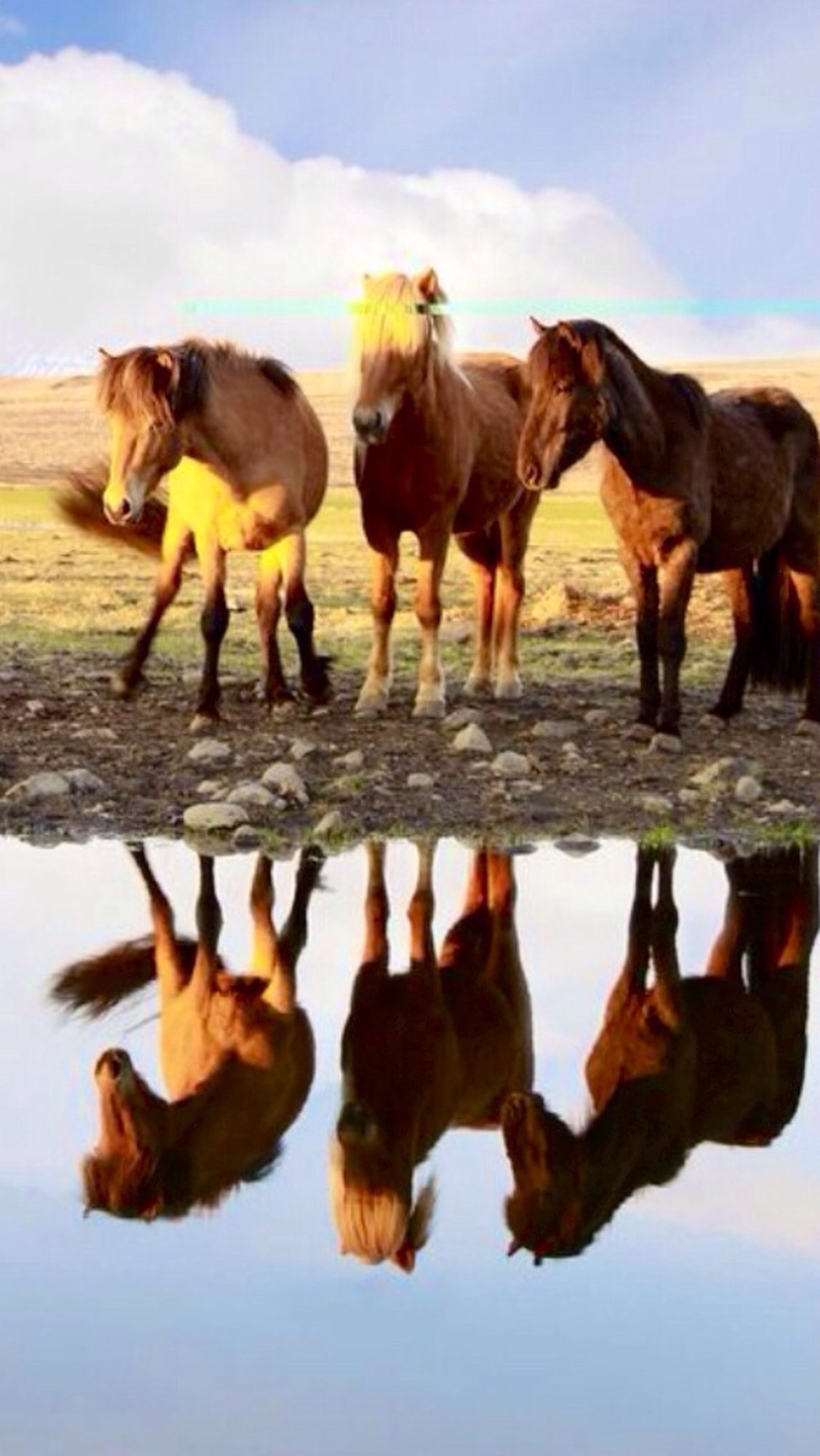 domestic animals, animal themes, mammal, horse, dog, pets, livestock, working animal, two animals, three animals, one animal, standing, full length, herbivorous, sky, nature, day, togetherness, water, outdoors