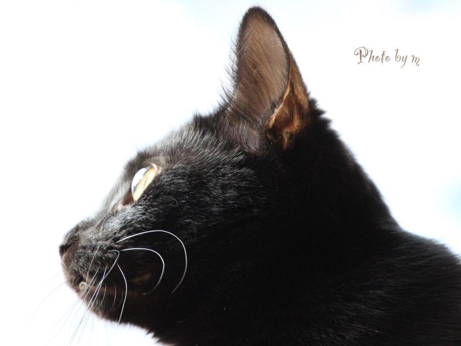 Cat Cat♡ Cat Lovers 保護猫 保護猫カフェ Animal 猫 黒猫Love Black Cat Photography