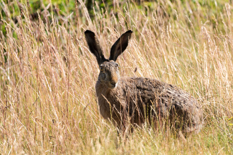 Hares or wild rabbits in the city of Stockholm Animal Wildlife City Grass Hare Mammal No People One Animal Outdoors Rabbit Wild Animals In The City