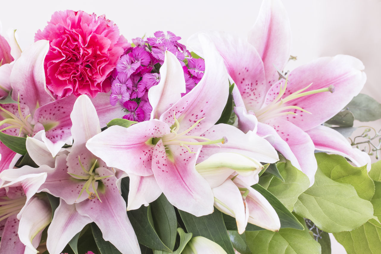 Beauty In Nature Carnation Close-up Day Flower Flower Head Fragility Freshness Green Color Growth Leafs Lilies In Bloom Nature No People Outdoors Petal Pink Color Plant Pupleflowers Rhododendron Springtime
