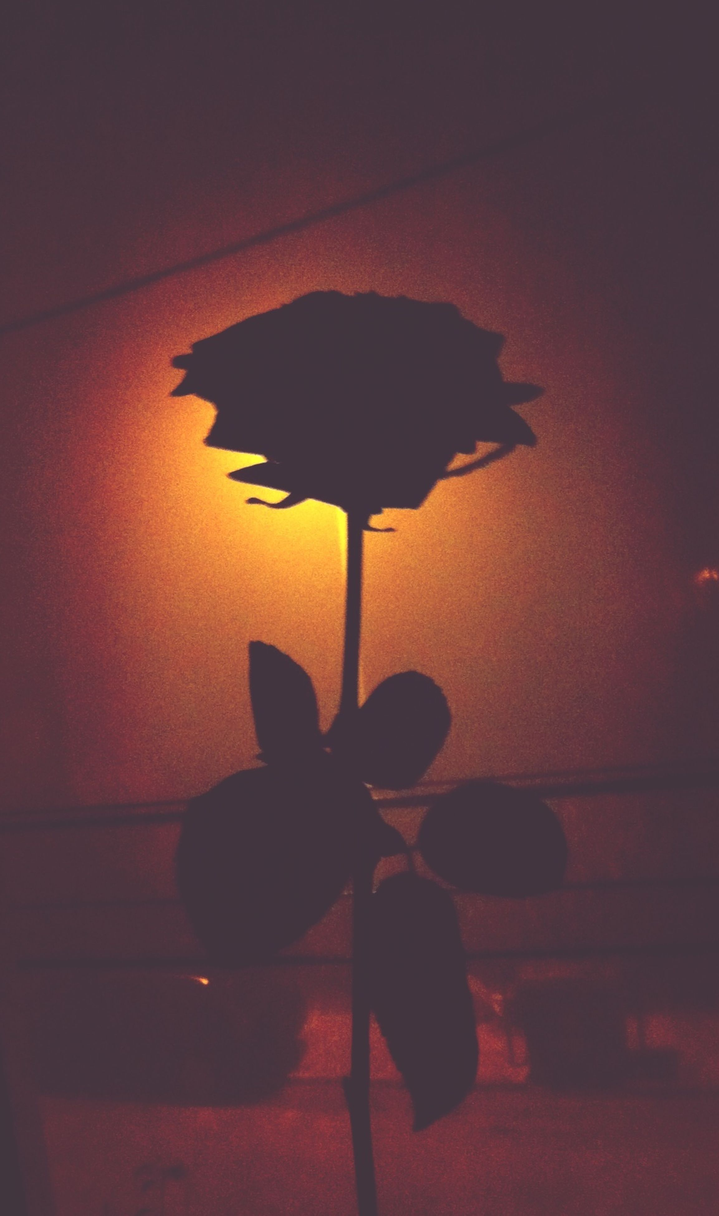 indoors, wall - building feature, home interior, shadow, close-up, silhouette, wall, flower, illuminated, lighting equipment, dark, decoration, no people, hanging, copy space, light - natural phenomenon, orange color, electric lamp, darkroom, table
