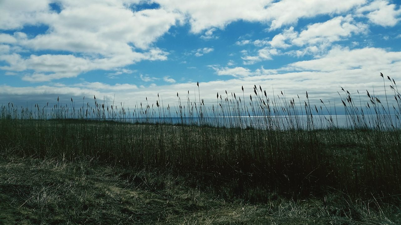 Lake View Tall Grasses Clouds And Sky