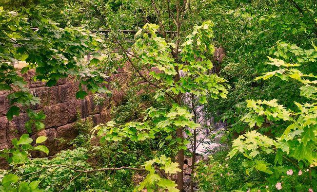 'HiddenWaterfall' Taking Photos Oslo2016✨ Hiddenplaces Waterfalls And Calming Views  Summertime AndTheLivingIsEasy Enjoying Life Hiking URB✨ Relaxing Summer2016✨ Urbannature KariJosefiné✨