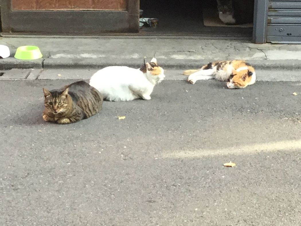 Cats sleeping, in Asakusa-bashi Tokyo Japan.