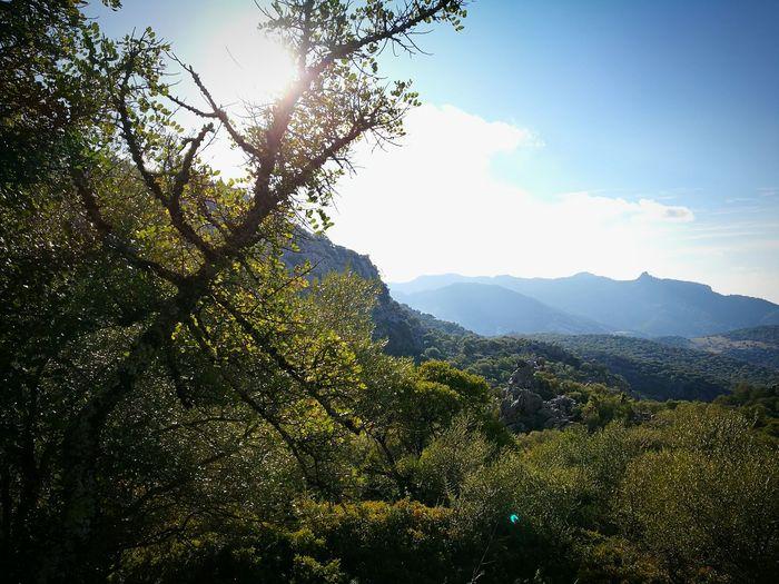 Tree Nature Sky Mountain Beauty In Nature Landscape Scenics Mountain Range Outdoors No People Day Sunlight Trekking Bushes SPAIN España El Salto Del Cabrero Benaocaz