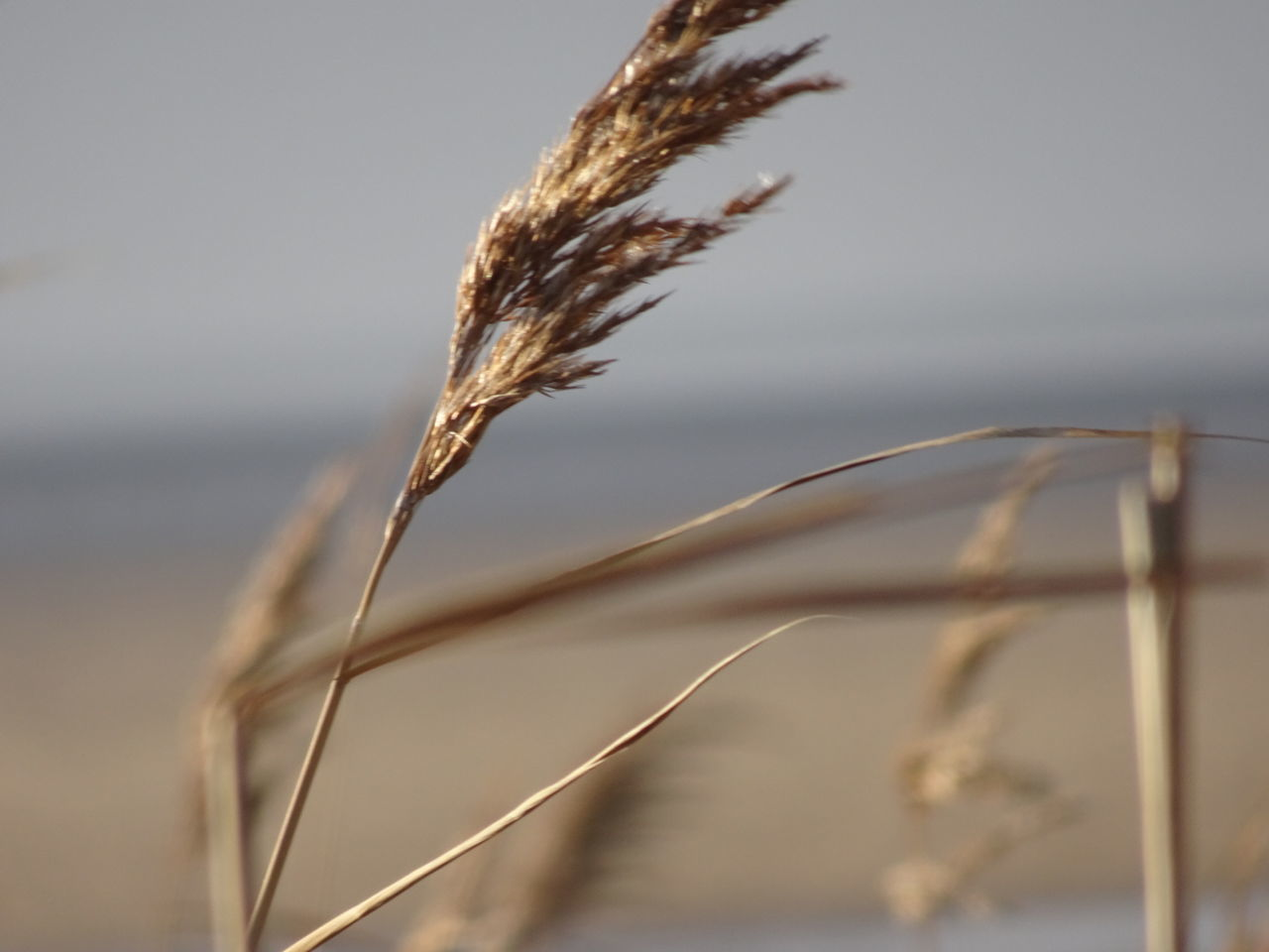 EyeEm Selects Grasses In Foregound Beach Photography