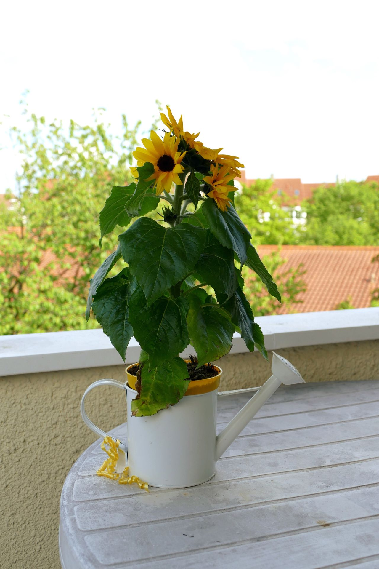 Beautiful stock photos of sunflower, Balcony, Beauty In Nature, Blooming, Close-Up