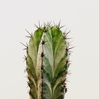 Hello Cactus Macro Photography Etcjournal