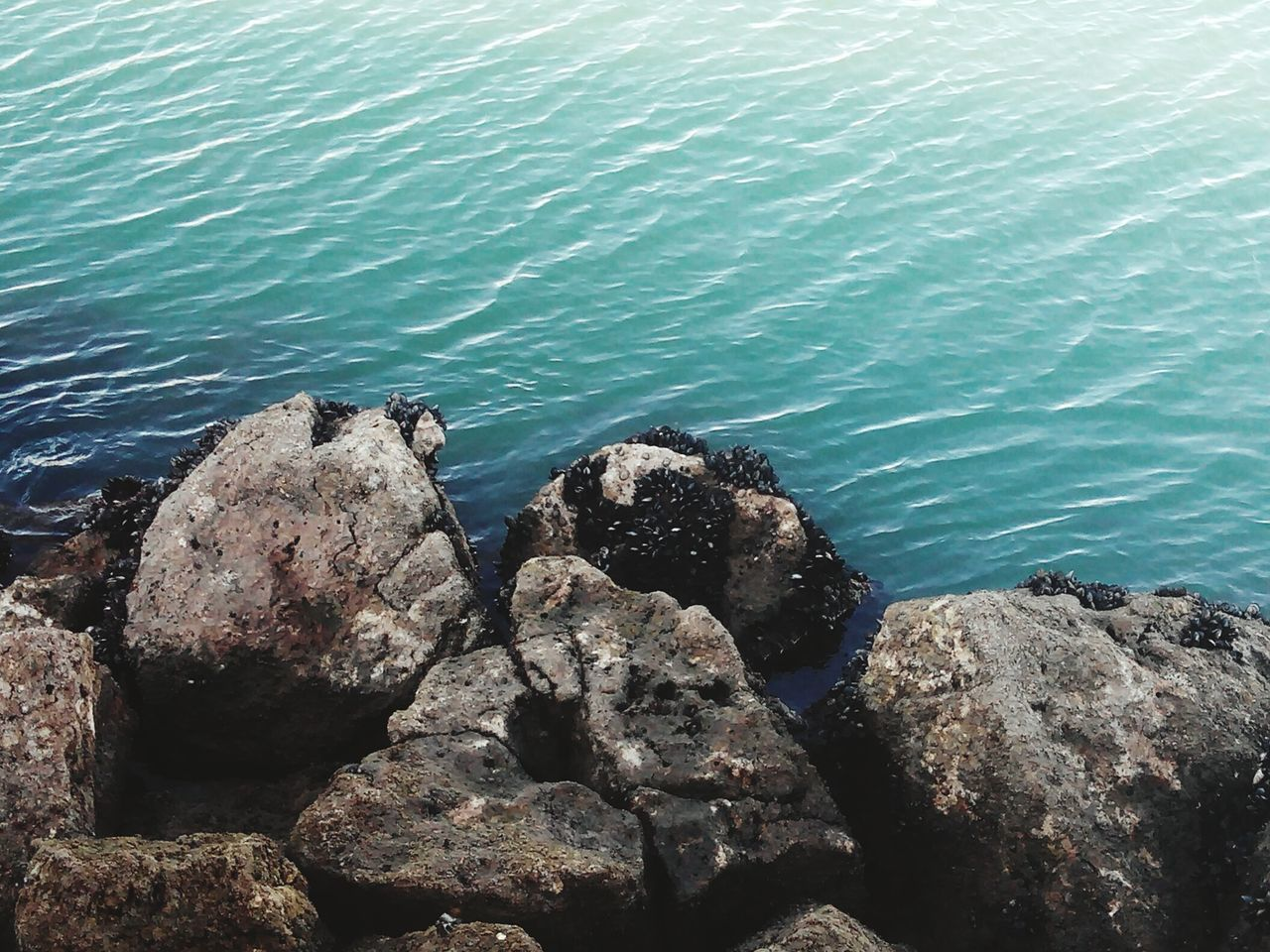 sea, rock - object, water, nature, no people, day, outdoors, high angle view, animals in the wild, beauty in nature, beach, animal themes, sea life, mammal