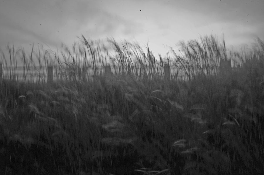 Kolong 6 Abstract Beauty In Nature Blur Blurred Motion Blurred Visions Blury Cereal Plant Close-up Crop  Day Farm Field Grass Growth Landscape Nature No People Outdoors Plant Rural Scene Scenics Sky Tranquil Scene Tranquility Wheat
