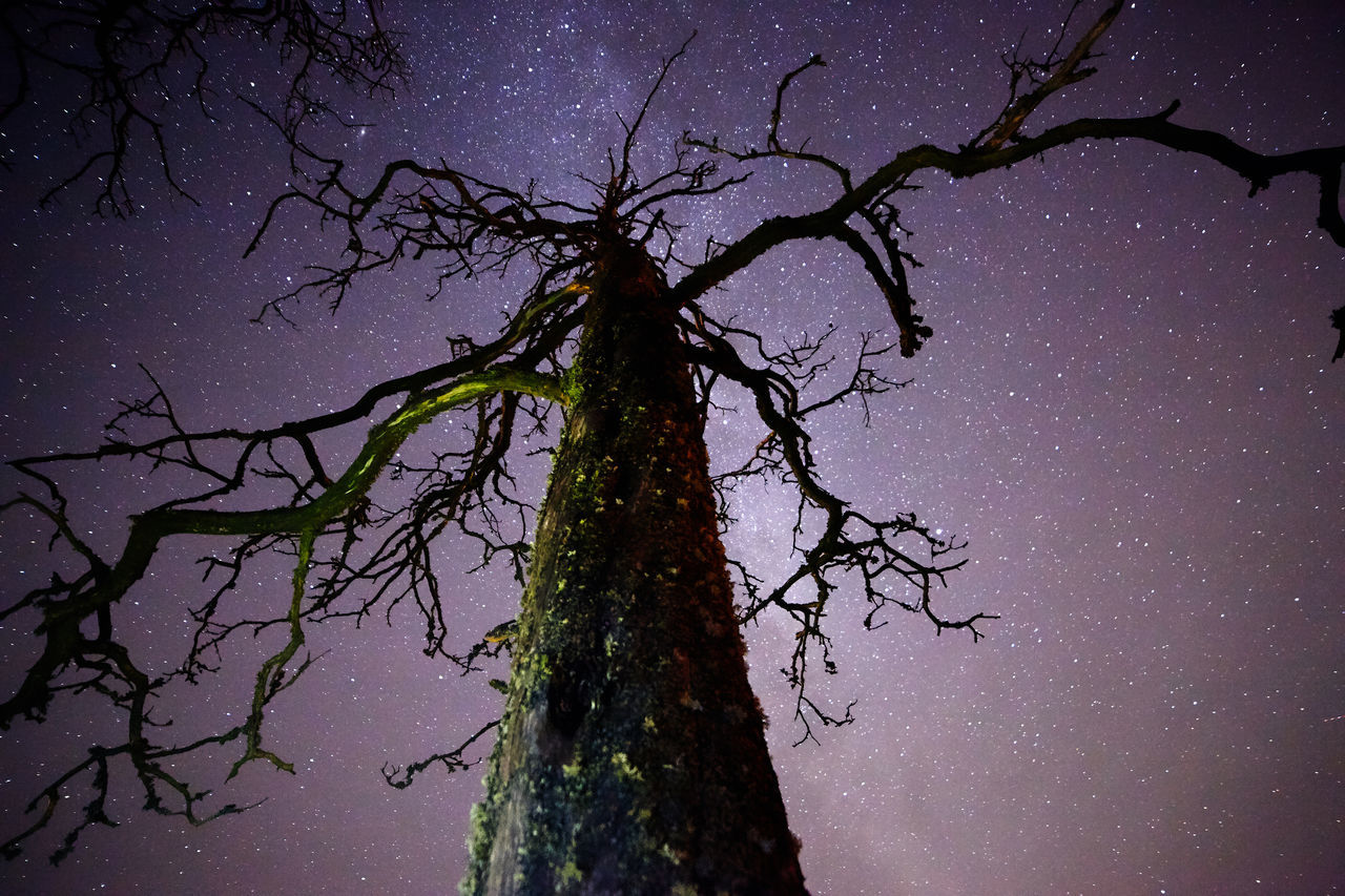 Deadwood at night with stars and the Milky Way on the sky Bare Tree Beauty In Nature Branch Darkness Deadwood  Milky Way Mysterious Mysterious Landscape Nature Night Night Sky No People Outdoors Scenics Silhouette Single Tree Sky Star - Space Stars Tranquility Tree Tree Trunk Tree Trunk Trees Twilight