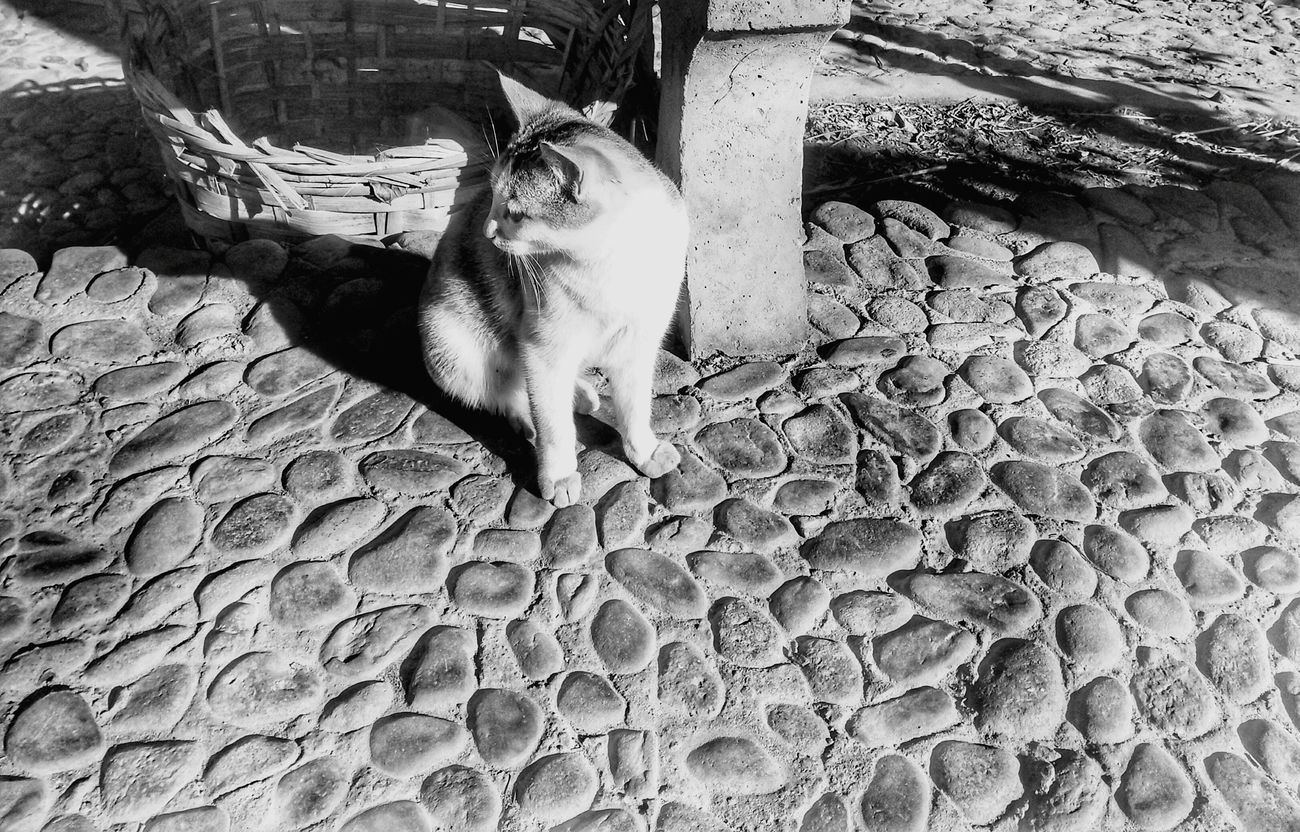 Shadow Cat First Eyeem Photo Outdoors No People Blackandwhite Cats 🐱 Xiaobai Little White