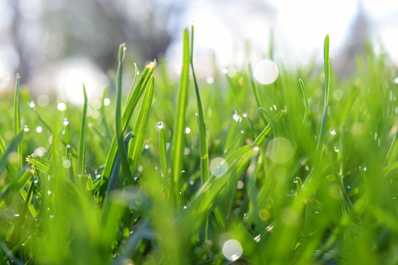 green color, grass, nature, drop, growth, beauty in nature, freshness, selective focus, no people, close-up, day, wet, outdoors, water, fragility