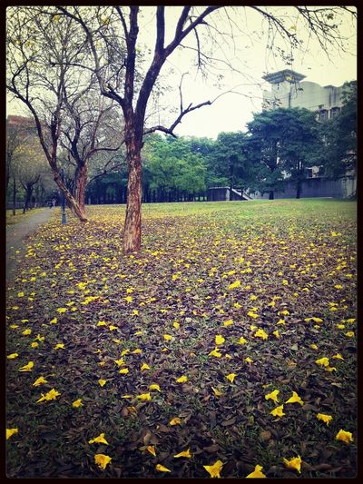 After the rain, all the flowers fell.