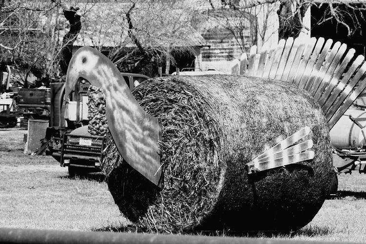 Turkey Hay Bale Sculpture La Vernia, Tx