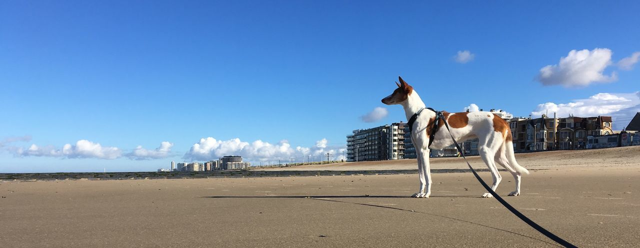 Sky Nature Beach Sea Animal Themes Podenco Wrong Perspective Perspective Beauty In Nature