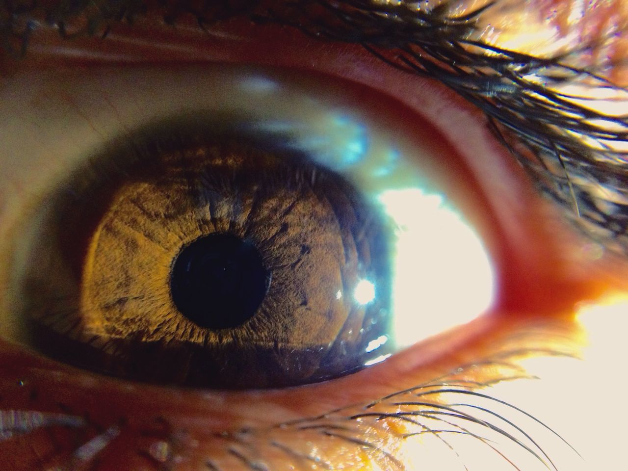Human Eye Sensory Perception Eyelash Eyesight Macro Iris - Eye Extreme Close-up Unrecognizable Person Human Body Part Close-up One Person Eyeball Real People One Woman Only People Vision Outdoors Adults Only Day Adult