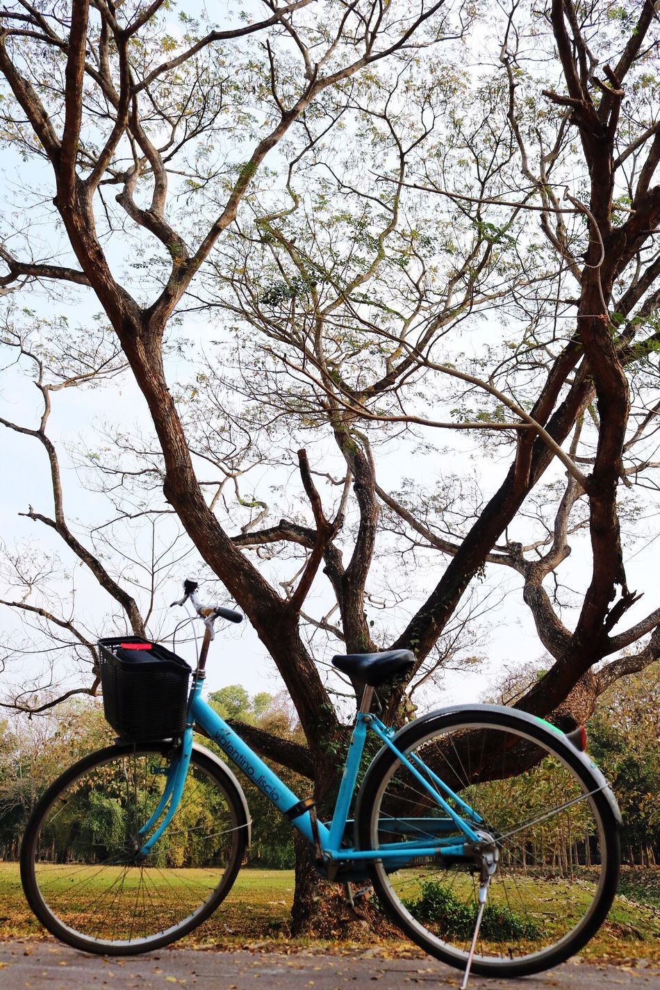 Bicycle Tree Transportation Land Vehicle Mode Of Transport Outdoors Beauty In Nature Branch Stationary No People Day Sky