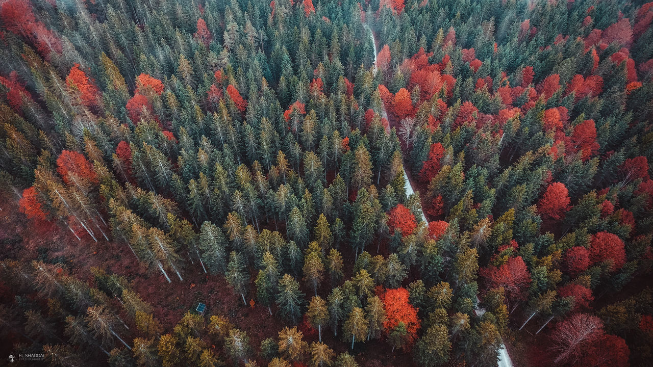 Autum Colors Autumn Dronephotography Nature Collection Nature Photography One Way Red Color Trees Wood The Great Outdoors - 2017 EyeEm Awards